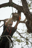 Tree Removals, Pruning, stump grinding. Winter discounts