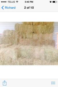 2016 fresh square bales hay