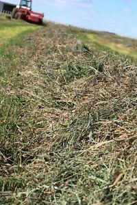 Smale hay bales for sale,Coaldale!!