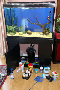 Fisth Tank 65 Gal with the stand and everything you need