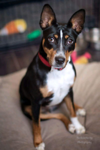 Niagara Dog Rescue - Avery is All Around Awesome