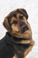Reese pour adoption au refuge Animadoption
