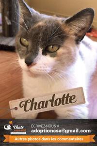 CHARLOTTE - Femelle