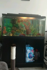 Selling a fish tank and 3 fish for 80
