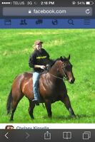 Need some help getting your horse going nice?