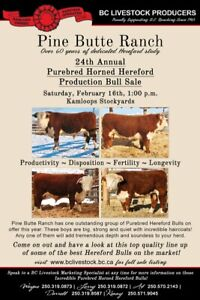 24th Annual Pine Butte Purebred Horned Hereford Bull Sale