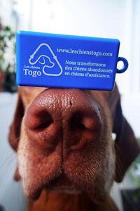 Changer des vies, un chien à la fois : Les chiens Togo