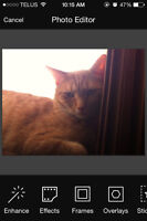 WANTED Orange  MALE KITTEN pic of our beloved Todd posted below