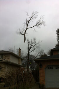 Tip Top Tree Removal and Services London Ontario image 1