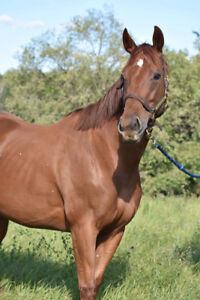 Event Prospect/Broodmare for Sale
