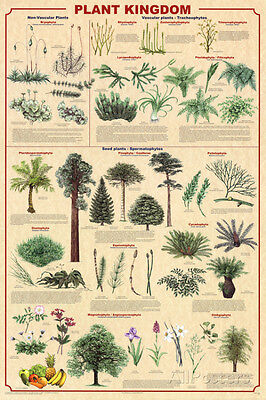 Plant Kingdom 2 Educational Science Chart Poster Poster Print  24X36