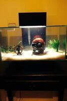 Aquarium Edge Fluval 23L