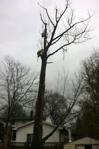 Tip Top Tree Removal and Services London Ontario image 2