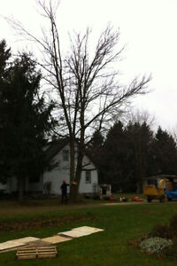 Tip Top Tree Removals and Services Stratford Kitchener Area image 9