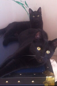 2 males kittens age 8 months and a female 1 yr 9 months-free