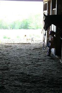 Horseback riding lessons for kids