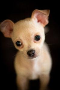 Pet photography $150