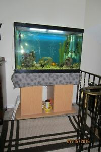 Everything you need to enjoy fish aquarium