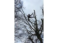 CSB tree surgery/landscapes