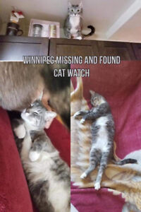**LOST CAT** missing from st.vital rd