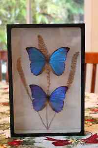 Butterflies - framed