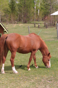 FREE Horse to Good Home