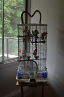 Three Parakeets + Full cage and accessories