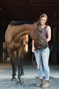 Coming 4 y/o 16hh Thoroughbred Mare