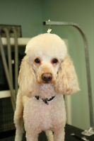 SPECIAL $10 OFF FIRST FULL GROOM! NATURAPETS GROOMING