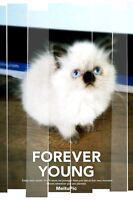 Only one female left-Ragdoll Himalayan kitten