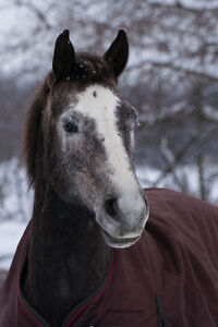 Looking for project large pony