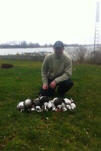 Fully Guided Waterfowl Hunts (high success rate)  Cambridge Kitchener Area image 8