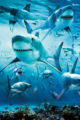 Shark Infested Poster Print, 24x36