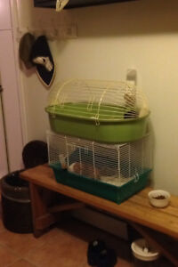 Guinea Pig / Cage / Ball / Food & Bedding