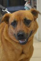 Journey-Oromocto and Area SPCA