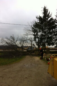 Tip Top Tree Removals and Services Stratford Kitchener Area image 10