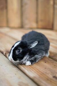 Baby Bunnies Kitchener / Waterloo Kitchener Area image 6