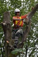 TOP-NOTCH TREE CARE...SPECIALIZING IN HAZARDOUS TREE REMOVAL