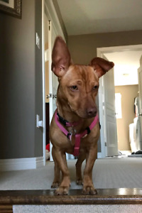 Niagara Dog Rescue - Kelsey is Looking for Her Forever Family!