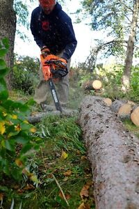 Tree trimming and removal services  London Ontario image 1
