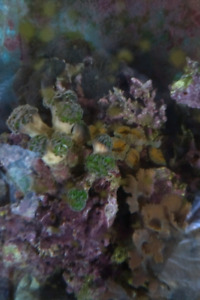 Live rocks and coral for sale