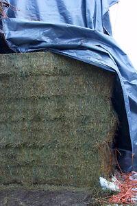 Bales - BIG squares Alfalfa Orchard Timothy
