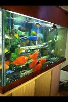 90 Gallon Aquarium with African Cichlids and all accessories