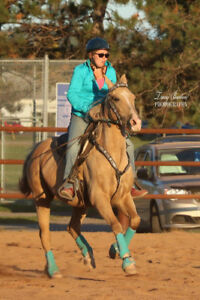 Registered QH gelding