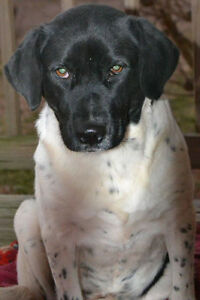 Jelly is a 1 year old, female, lab mix