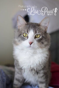 Silver is looking for a home