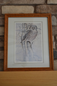 Gorgeous Limited Edition Owl Portrait by Paul Harpley