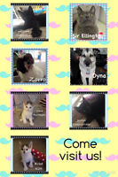 PERSIAN DREAMS & CANINE THEMES Adoption Day