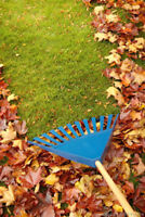 Fall leaves, eavestrough, and Yard cleaning raking servives
