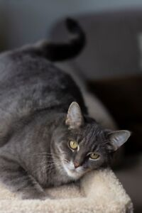 """""""Ariel"""" - super easy going spayed young lady looking for a home"""